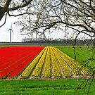 Spring on Flakkee 3 by Adri  Padmos