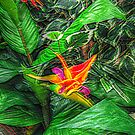 Bird of Paradise in a sea of green leaves by Jane Neill-Hancock