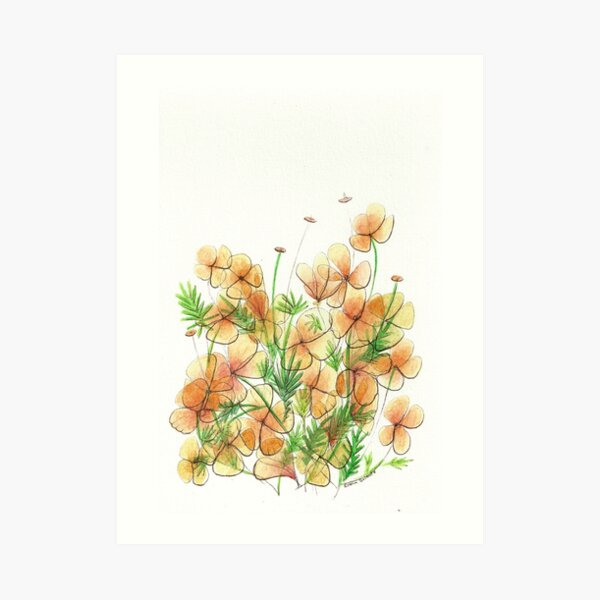 The Poppies in My Front Yard Art Print