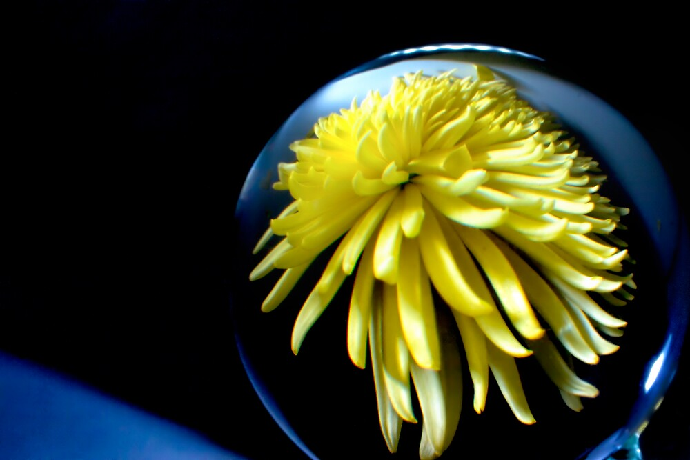 Through the crystal ball - Yellow Chrysanthemum by Vicki Field