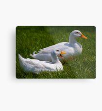 Quack quack quack, quack quack quack Metal Print