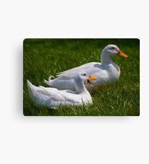 Quack quack quack, quack quack quack Canvas Print