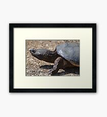 Moving At The Speed Of Turtle. Framed Print