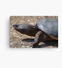 Moving At The Speed Of Turtle. Canvas Print