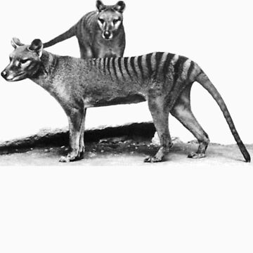 Thylacine - Extinct Tasmanian Tiger by mouse