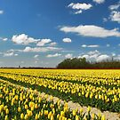 Spring on Flakkee 4 by Adri  Padmos