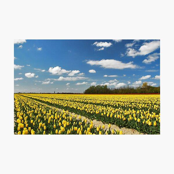 Spring on Flakkee 4 Photographic Print