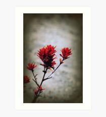 paintbrush wildflowers, Johnston's Ridge 2 Art Print