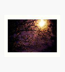 Stars in an Earthly Sky Art Print