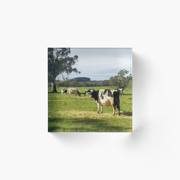 Holstein Friesians - Dairy Cows by Avril Thomas Acrylic Block