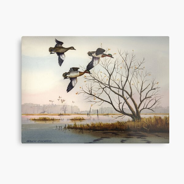 Greenwings Over The Marais des Cygnes Metal Print