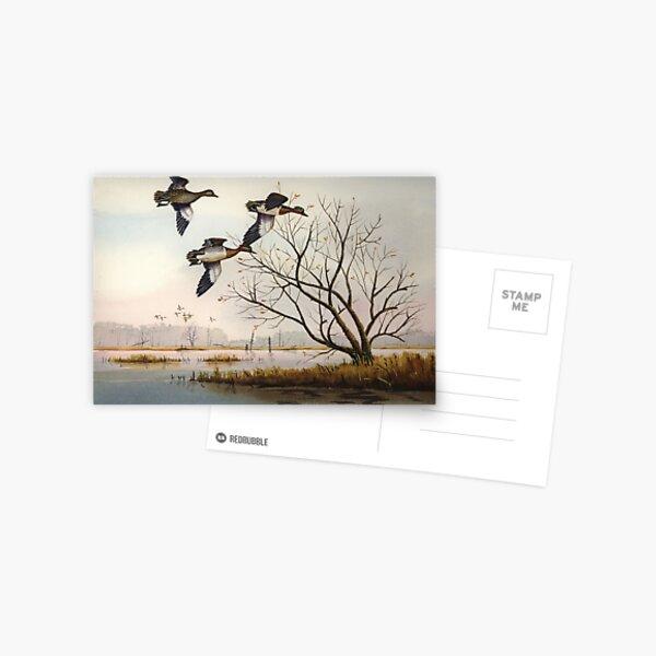 Greenwings Over The Marais des Cygnes Postcard