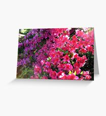 Azaleas In the Bright Sunlight Greeting Card