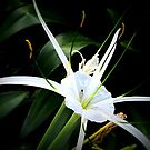 white and specks.... by mariatheresa