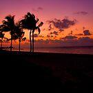Palm Skies by martinilogic