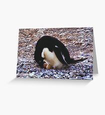 Adelie Penguin on its Nest Greeting Card