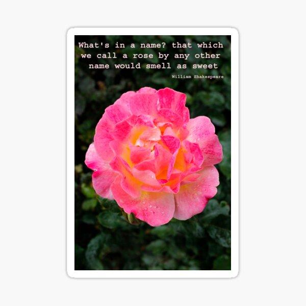 A rose in full bloom Sticker