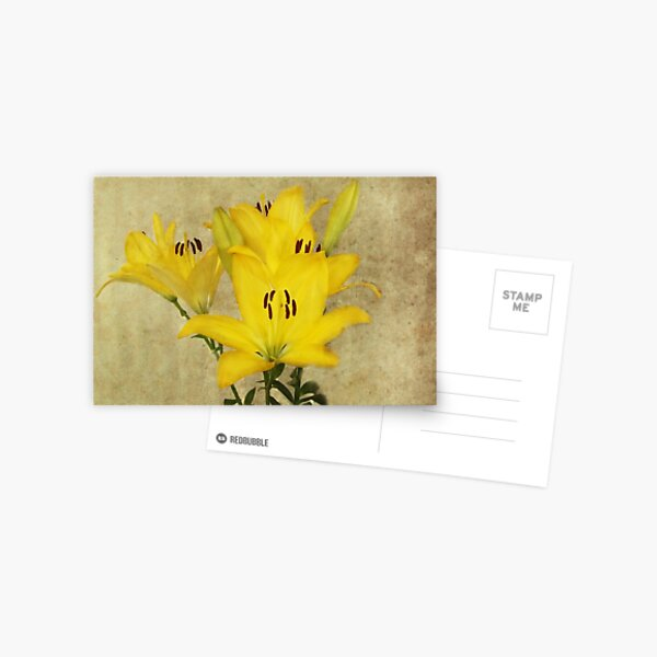 Yellow Lily's Postcard