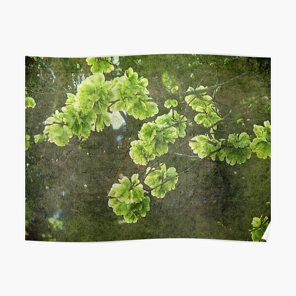 Green blossoms Poster