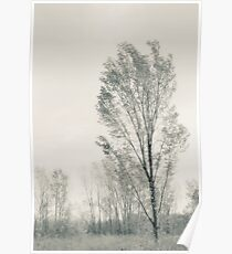 Tree and meadow Fallen Timbers Poster