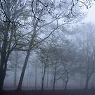 misty morning by anfa77