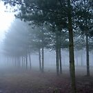 trees in the mist by anfa77