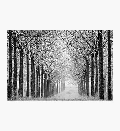 arranged in the fog Photographic Print
