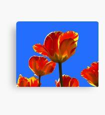 Electric Orange & Yellow Tulips Canvas Print