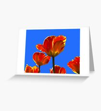 Electric Orange & Yellow Tulips Greeting Card