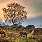 New Forest Ponies by Geoff Carpenter