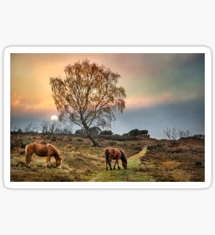 New Forest Ponies Sticker