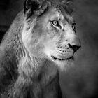 Lioness by Natalie Manuel