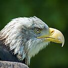 Eagle by Patrick Reinquin