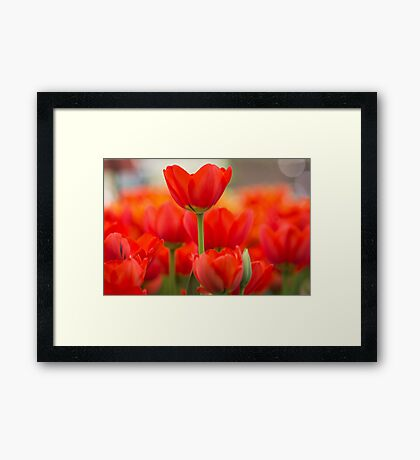 Sticking out Framed Print