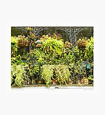 """""""Horticulturist Balcony"""" New Orleans French Quarter Photographic Print"""