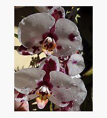 Orchids III - Orquídeas Photographic Print