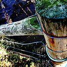 fencepost by NordicBlackbird
