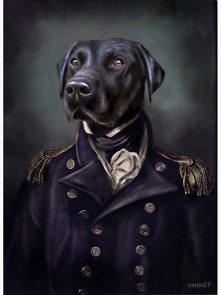 Labrador Portrait - Jake  by carpo17
