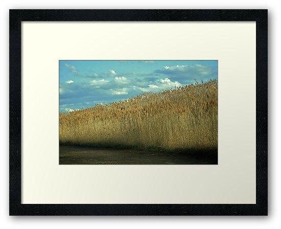 Tall Grass by Erin LeFevre-Josephs