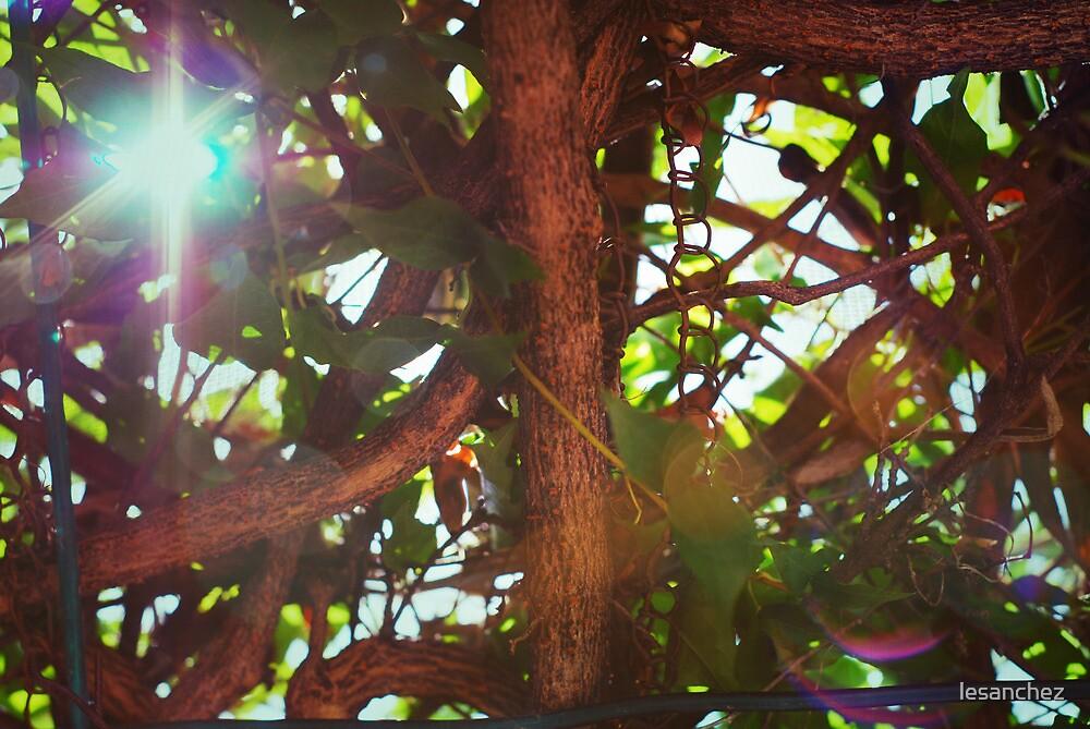 Sunbeam! by lesanchez