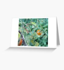 Fresh Tomato 2 Greeting Card