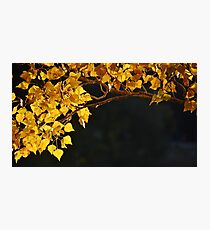 Golden Bower Photographic Print