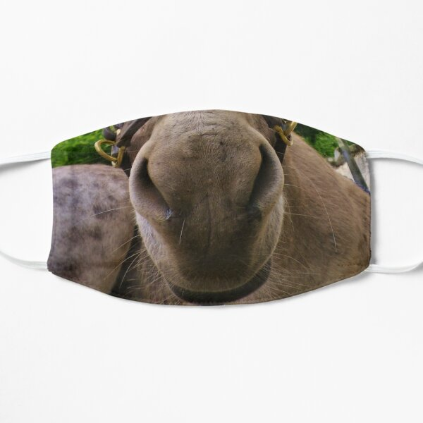 DONKEY - MAKE AN ASS OF YOURSELF Mask