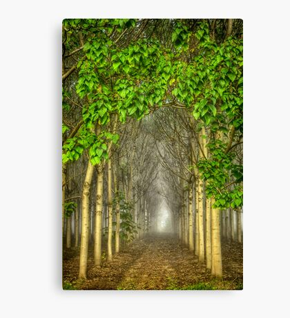 Watch where you are going (apologies to Winne the Pooh) Canvas Print