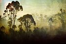 Morning Fog # 2  by Eve Parry