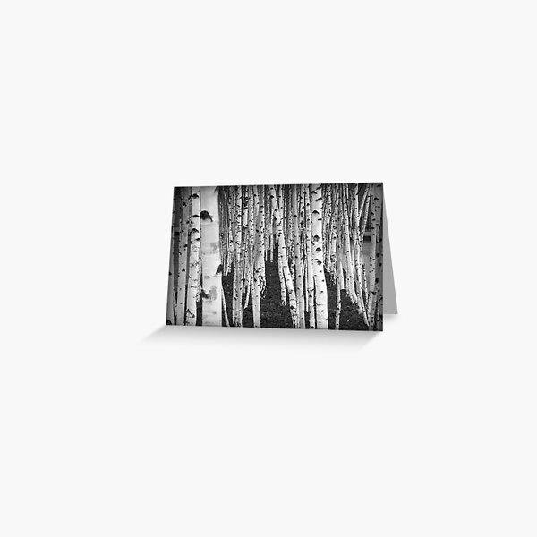 Silver Birch Trees Greeting Card