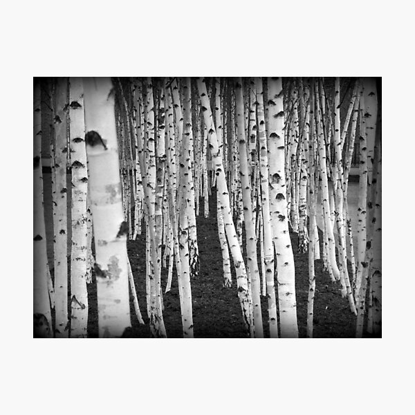 Birch Tree Gifts Merchandise Redbubble