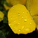 Droplets by dsimon