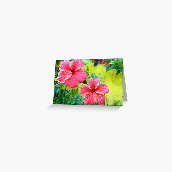 Beautiful Blooms! Greeting Card