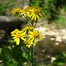 Yellow Wildflower Bouquet Golden Groundsel by Ron Russell